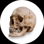 Reference Skulls por Skull Shoppe